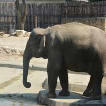 zoo-budapesta