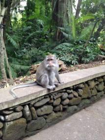Monkey Secret Forest