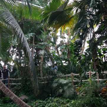 Pădurea tropicală