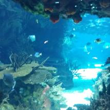 Viața în ocean