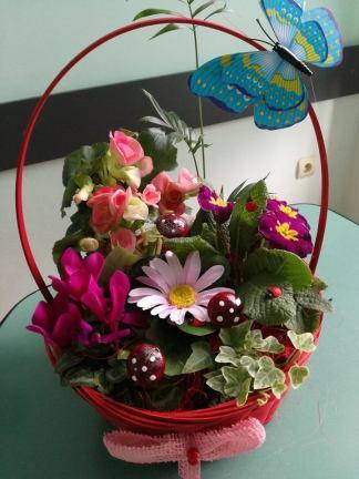 cos-flori