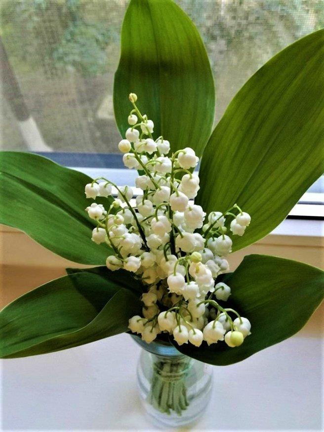 Flori de lăcrămioare