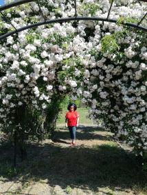trandafiri8